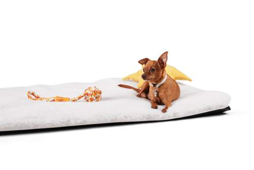 Wasserbett für Hund